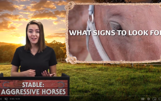 STABLE: AGGRESSIVE HORSES